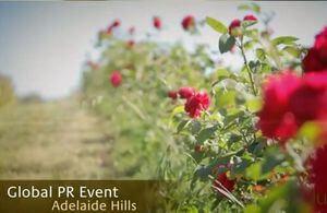 Jurlique PR Event